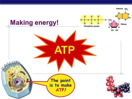 Making energy! ATP The point is to make ATP!.