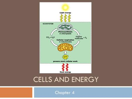 CELLS AND ENERGY Chapter 4. Preview Vocabulary  Metabolic processes take one of two directions:  They synthesize/anabolize (build up material and store.