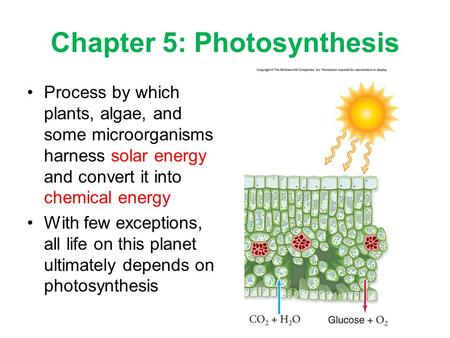 Chapter 5: Photosynthesis