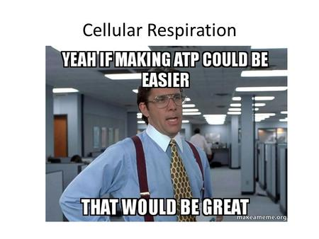 Cellular Respiration. By the end of this class you should understand: The major processes that living things use to make energy The relationship between.