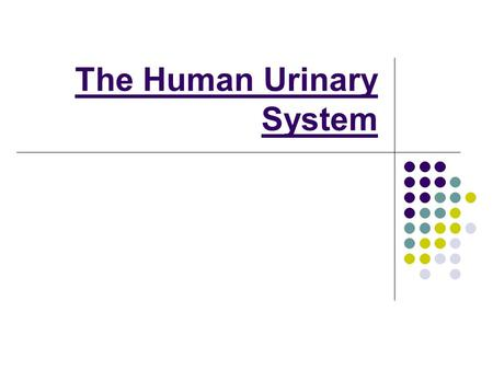 The Human Urinary System