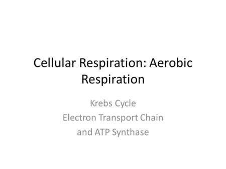 Cellular Respiration: Aerobic Respiration Krebs Cycle Electron Transport Chain and ATP Synthase.