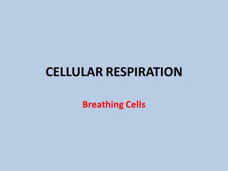CELLULAR RESPIRATION Breathing Cells. Three Stages.