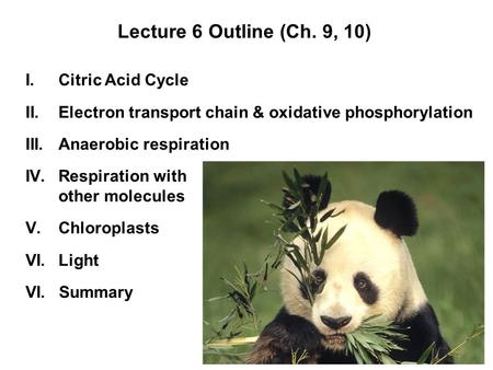 Lecture 6 Outline (Ch. 9, 10) I.Citric Acid Cycle II.Electron transport chain & oxidative phosphorylation III.Anaerobic respiration IV.Respiration with.