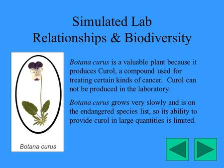 Simulated Lab Relationships & Biodiversity