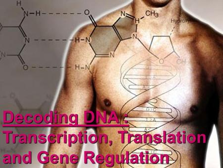 Decoding DNA : Transcription, Translation and Gene Regulation.