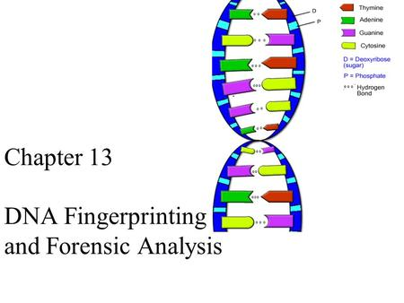 What is a DNA fingerprint?