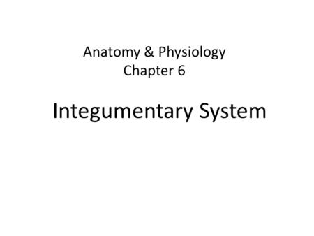 Chapter 6 integumentary system  Custom paper Sample