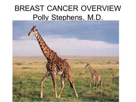 BREAST CANCER OVERVIEW Polly Stephens, M.D.. BREAST ANATOMY.