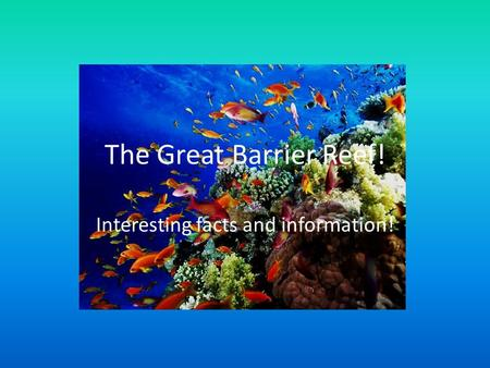 The Great Barrier Reef! Interesting facts and information!
