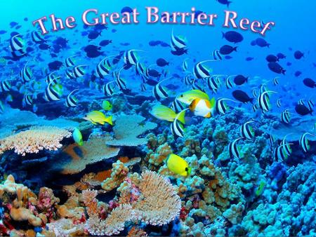 Many tourists, hot and nice water  Divers  Very popular destination for tourists, especially the Whitsunday Islands and Cairns region  Daily boat.