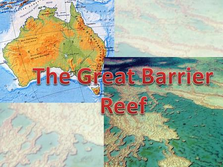 Along the eastern coast of Australia there is the Great Barrier Reef, which extends for 2000 km. It is built by the coral polyp.