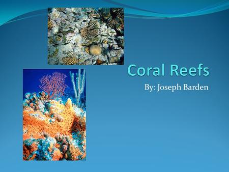 By: Joseph Barden. Inside a coral reef The coral reef is the only ecosystem constructed and composed by animals. They offer 25% of all marine life. They.
