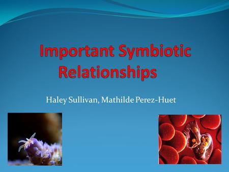 Haley Sullivan, Mathilde Perez-Huet. Plasmodium Protists: apicomplexans Parasitic Release sporozoites into hosts Complex life cycles www.youtube.com/watch?v=OEDhe4MPEMc.