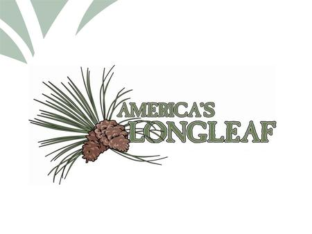 Click to edit Master title style. BRIEF HISTORY OF LONGLEAF PINE Rise and fall of LLP Forest Management for Longleaf an Overview Local/State/Federal Efforts.