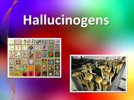 Hallucinogens. Hallucinogens- Any drug that causes a person to hallucinate (see or hear things that are not there). – The effects are often referred to.