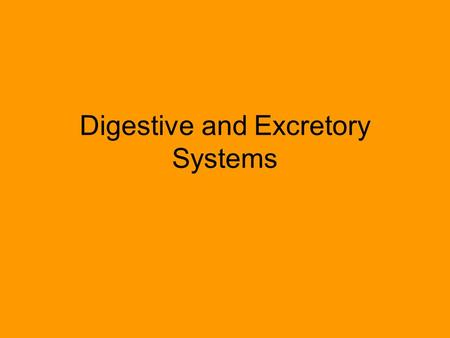 Digestive and Excretory Systems. Did you know that your digestive system measure about 30 feet long – from end to end?