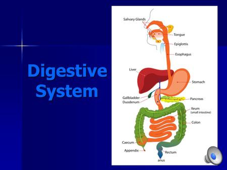 Digestive System. Organs of the Digestive System Mouth Mouth Esophagus Esophagus Stomach Stomach Small Intestine Small Intestine Large Intestine Large.