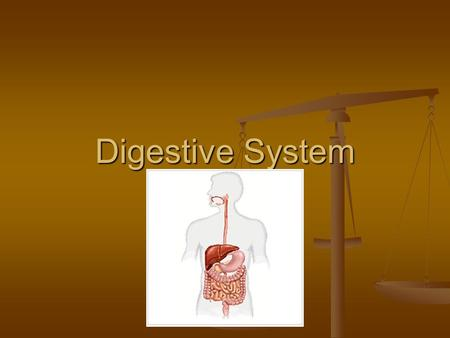 Digestive System. Do It Now 1. What are the two functions of an animal digestive system? (2 points) 2. Write the following in correct order and briefly.