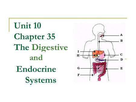 Unit 10 Chapter 35 The Digestive Endocrine Systems and.