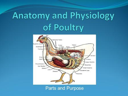 Anatomy and Physiology of Poultry