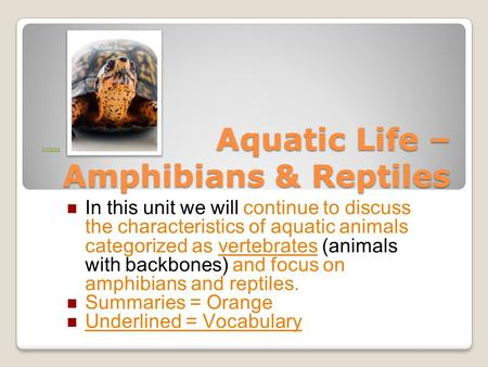 Aquatic Life – Amphibians & Reptiles In this unit we will continue to discuss the characteristics of aquatic animals categorized as vertebrates (animals.
