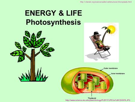 ENERGY & LIFE Photosynthesis