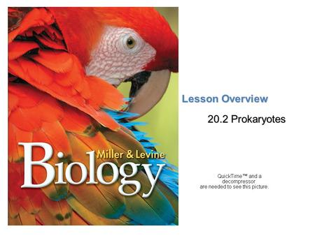 Lesson Overview 20.2 Prokaryotes.