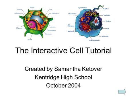 The Interactive Cell Tutorial