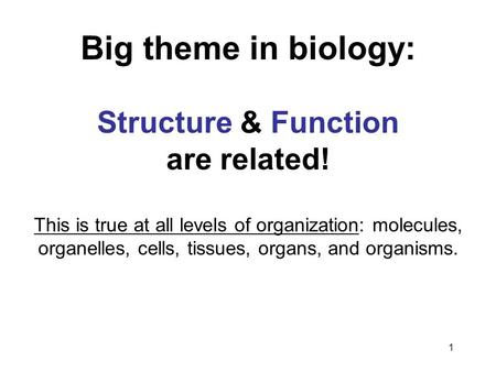 Big theme in biology: Structure & Function are related!