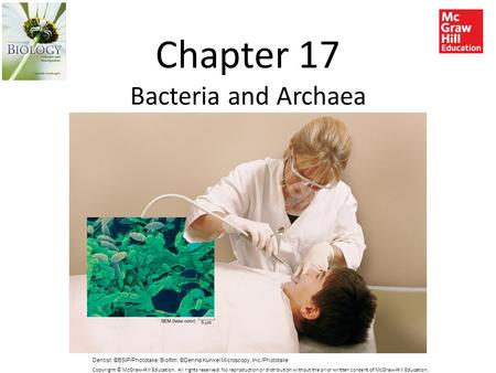 Chapter 17 Bacteria and Archaea Dentist: ©BSIP/Phototake; Biofilm: ©Dennis Kunkel Microscopy, Inc./Phototake Copyright © McGraw-Hill Education. All rights.