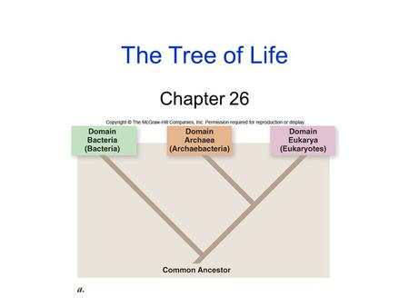 The Tree of Life Chapter 26. 2 Origins of Life The Earth formed as a hot mass of molten rock about 4.5 billion years ago (BYA) -As it cooled, chemically-rich.