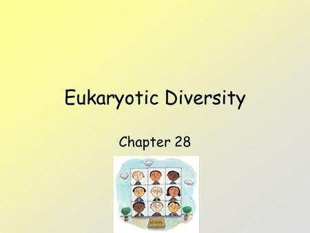 Eukaryotic Diversity Chapter 28. Protists Protists – eukaryotes; more complex than prokaryotes. 1 st – unicellular - called protists – in 1 big kingdom.