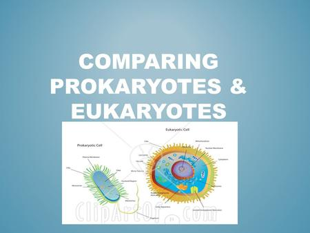 COMPARING PROKARYOTES & EUKARYOTES. PROKARYOTESEUKARYOTES CYTOPLASM Cell Membrane DNA Always single- celled No Nucleus DNA is a simple, Single loop Small.
