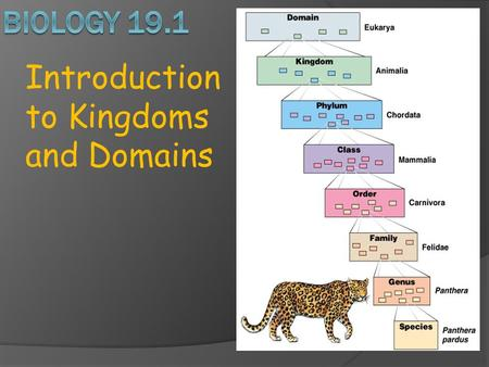 Introduction to Kingdoms and Domains