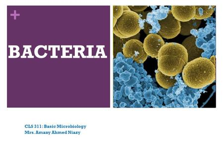 + BACTERIA CLS 311: Basic Microbiology Mrs. Amany Ahmed Niazy.