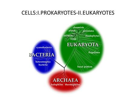 CELLS:I.PROKARYOTES-II.EUKARYOTES. I.PROKARYOTES BACTERIA-ARCHAEA 1.Bacteria are one of those and they are a tremendous ubiquity. The are everywhere…