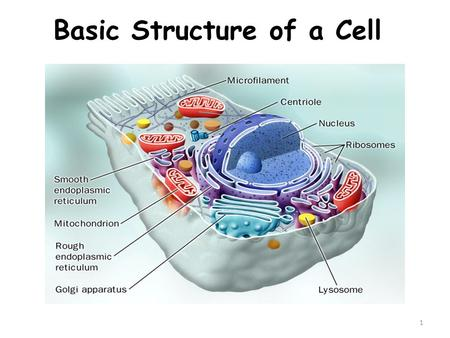 1 Basic Structure of a Cell. 2 History of Cells & the Cell Theory.