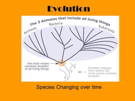Evolution Species Changing over time. Charles Darwin Evolution by Means of Natural Selection.