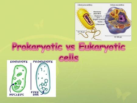 Prokaryotes are unicellular organisms, found in all environments. Prokaryotes are the largest group of organisms, mostly due to the vast array of bacteria.