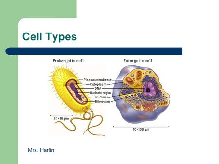 Cell Types Mrs. Harlin. 1.1.2 Compare prokaryotic and eukaryotic cells in terms of their general structures (plasma membrane and genetic material) and.