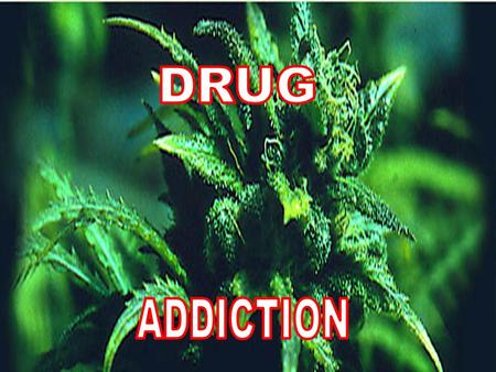 Definition: Drug addiction involves compulsively seeking to use a substance, regardless of the potentially negative social, psychological and physical.