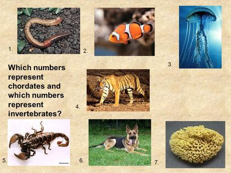 1. 2. 3. Which numbers represent chordates and which numbers represent invertebrates? 4. 5. 6. 7.