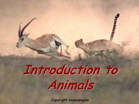 Introduction to animals Introduction to Animals Copyright cmassengale.
