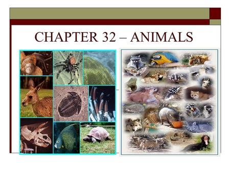 CHAPTER 32 – ANIMALS. 32-1: The Nature of Animals  Two types of Animals: Vertebrates  Animals with a backbone Invertebrates  Animals without a backbone.