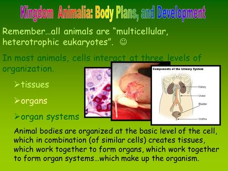 Kingdom Animalia: Body Plans, and Development