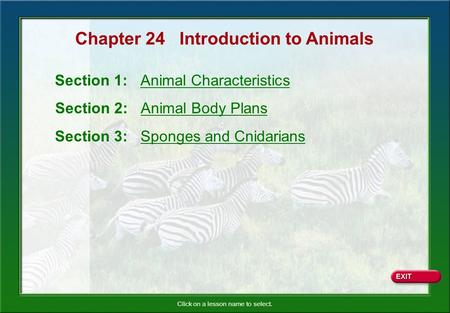 Chapter 24 Introduction to Animals