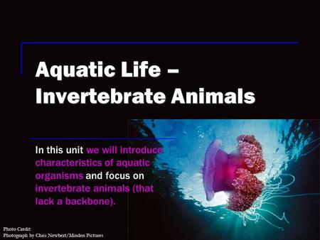 Photo Credit: Photograph by Chris Newbert/Minden Pictures Aquatic Life – Invertebrate Animals In this unit we will introduce characteristics of aquatic.