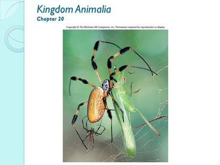 Kingdom Animalia Chapter 20. Kingdom Animalia Overview ◦ Heterotrophic, acquire food by ingestion ◦ Locomotion by means of muscles ◦ Multicellular, high.
