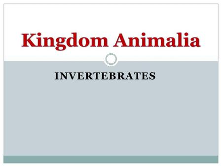 Kingdom Animalia Invertebrates.
